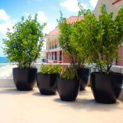 Extra-Large-Round-commercial-plants-pot-3
